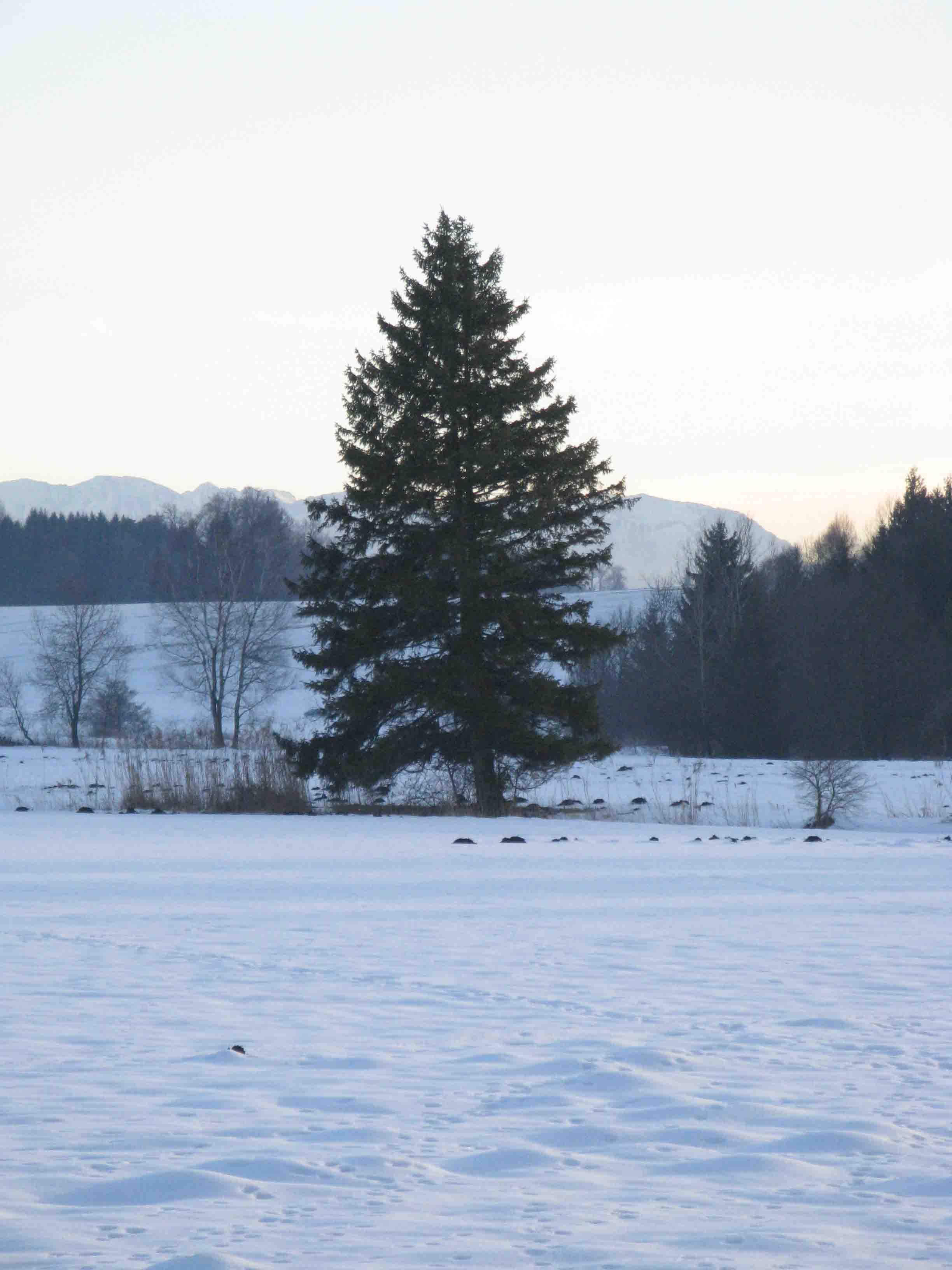 Brucker Moor im Winter 1