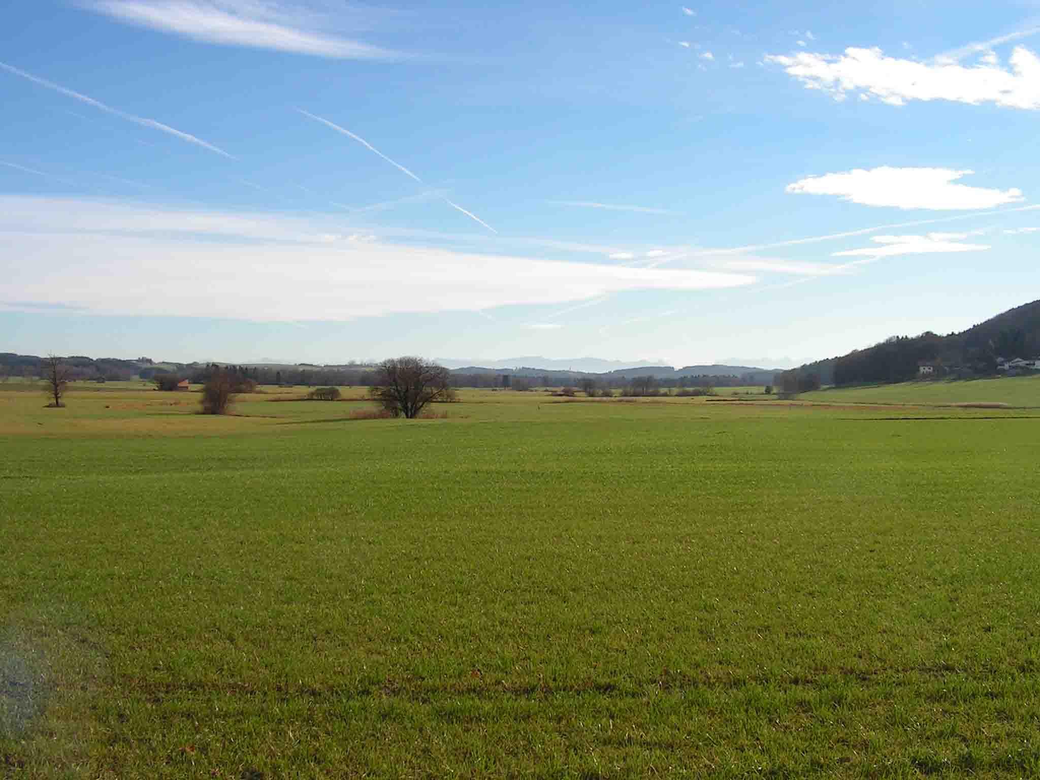 Brucker Moor im Sommer 1