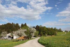 Reisenthal Frühling 2-s