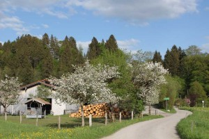 Reisenthal Frühling-s