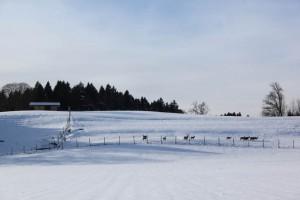 Reisenthal Winter-s- 2